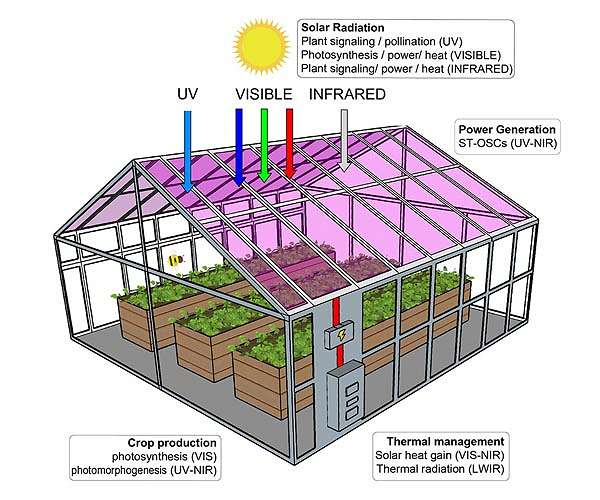 Study finds plants would grow well in solar cell greenhouses